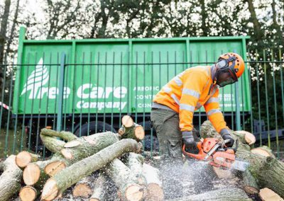 Tree Removal, Firdene House, Gomersal
