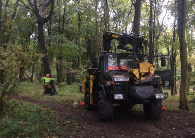 Chevin Park Tree Removal and Pruning