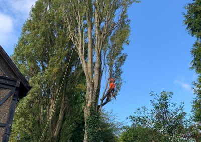 Mature Poplar Tree Removal, Leeds
