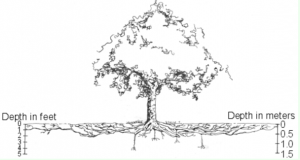 Protection of Trees During Site Development